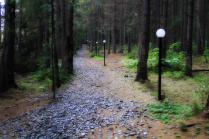 Дорога в сказочный лес