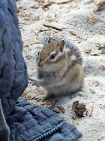 Где-же тут карман с орешками?