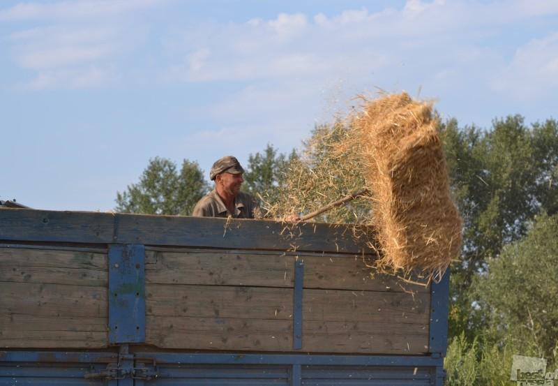 Жизнь деревенская