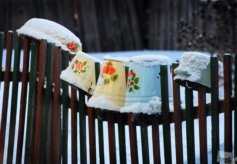 Цветущая ограда..... Январь.