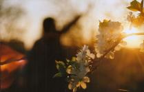 поцелуй солнца