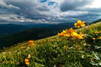 Альпийские луга Хамар-Дабана