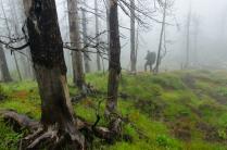Тишина в мертвом лесу