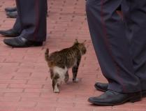 Свободный кот в свободной стране