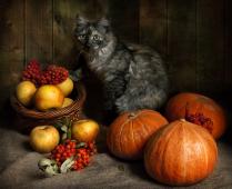 Котенок в тыквах