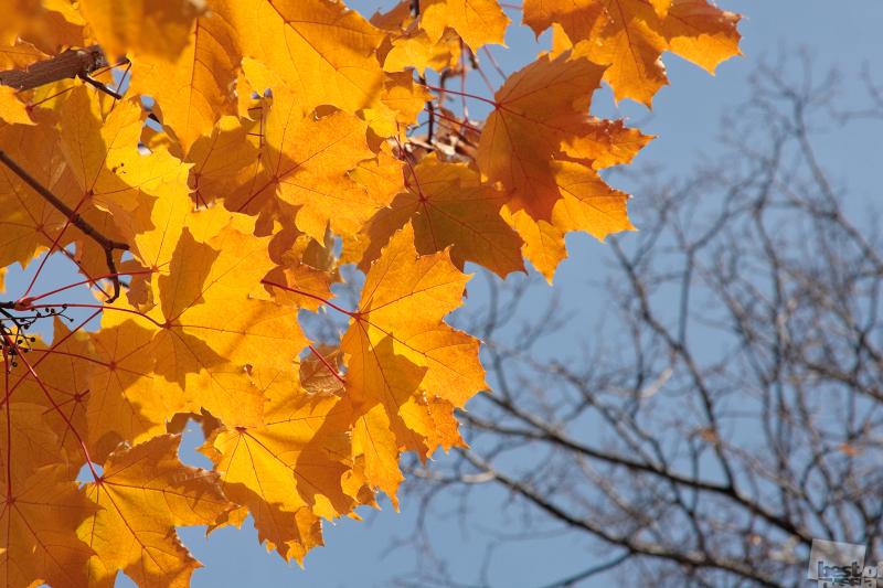 Осенний Инь-Ян