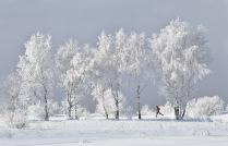 Сибирская пробежка