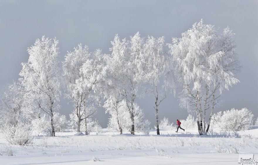 Siberian Joggen