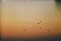 восемь птиц и душа
