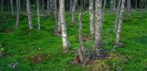 уничтожение леса в берендеевом царстве футбольных чемпионатов