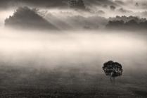 Сквозь туман.