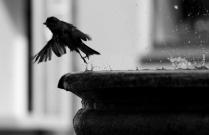 Мгновение полета