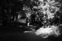 Вспоминая Бунина. Темные аллеи