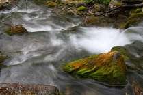 Мохнатый ручей