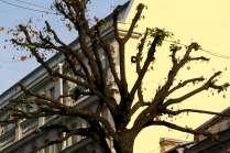 Дерево. На грани