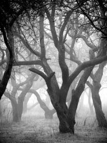 Мистический лес