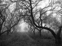 Туманная тропа.