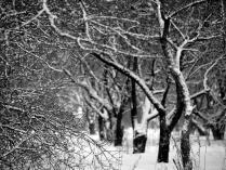 Деревья в снегу.