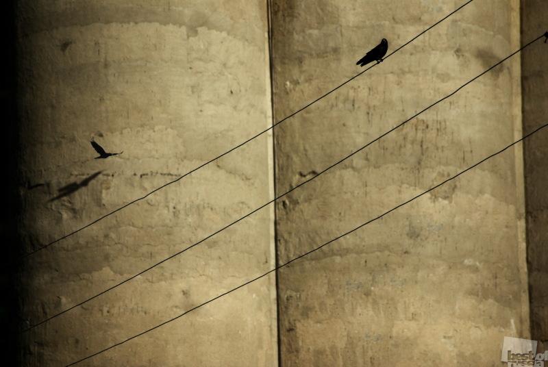 Элеватор, вороны и тени