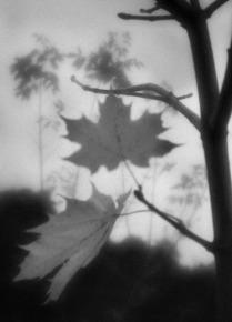 Осень сквозь монокль