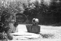 На конном дворе