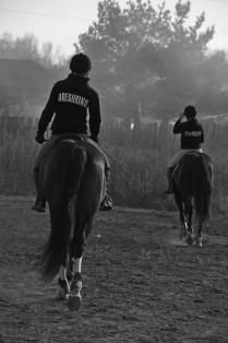 Взаимодейтвие всадника и лошади