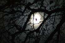 Взгляд ночи