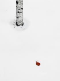Белая березка, красный листик