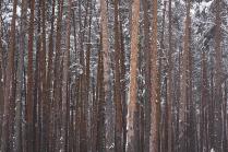 переход от осени к зиме