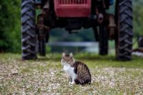 Вася-тракторист