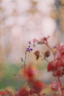 последний цветок.