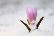 Вот так весна!