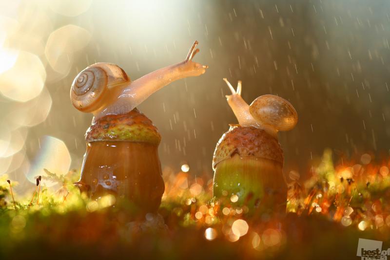 Слепой дождь
