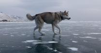 Байкальский охотник