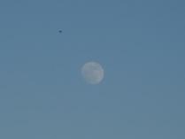 Луна и птица