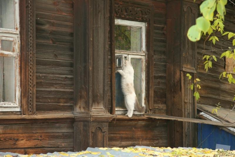 Мяу, дома кто-нибудь есть?