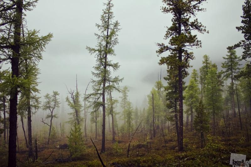 Заколдованный лес. Бурятия.