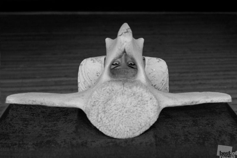 Наследие китовой кости
