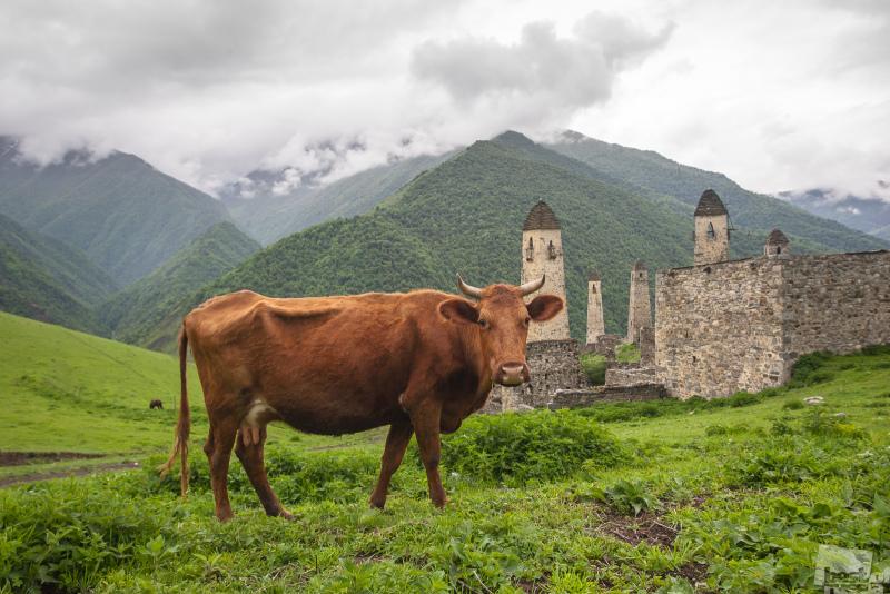 В горах Ингушетии