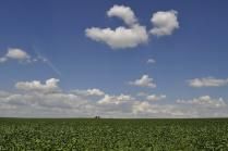 Сахарные поля