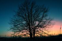 Дерево в закатном свете