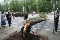 Нестроевое дерево