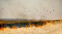 Весенний пожар
