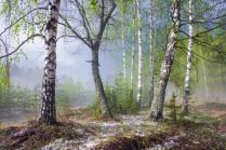Весенний лес после грозы 2