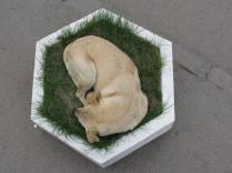 Собака-цветок