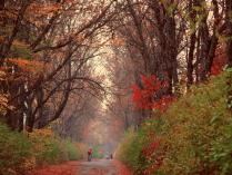 Дорога в осень.