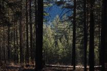 Леса о.Ольхон