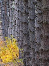 Лес начинается за деревьями.
