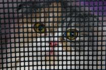 Международный выставочный кот