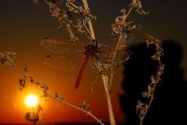 Крылатые нюансы южных закатов